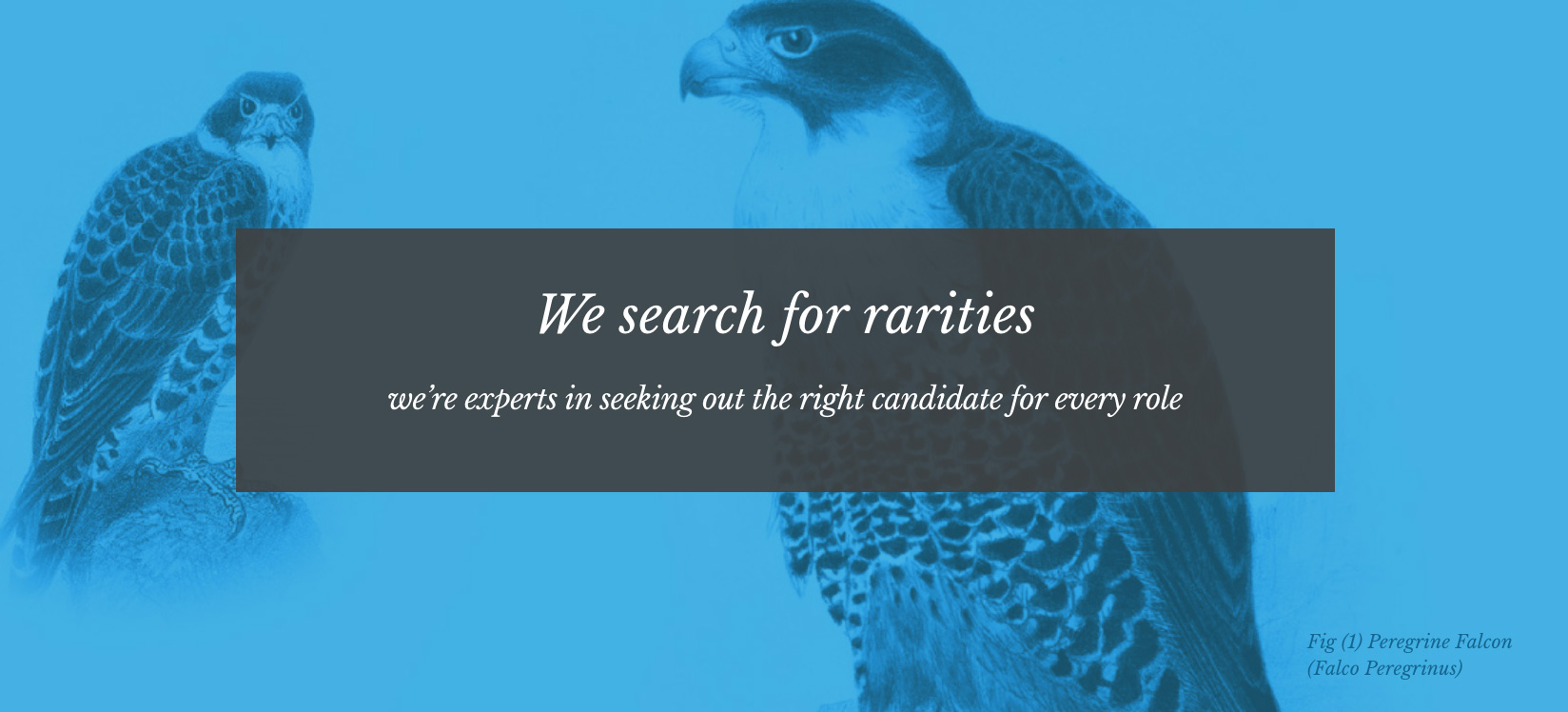 Website design for Chartres Search